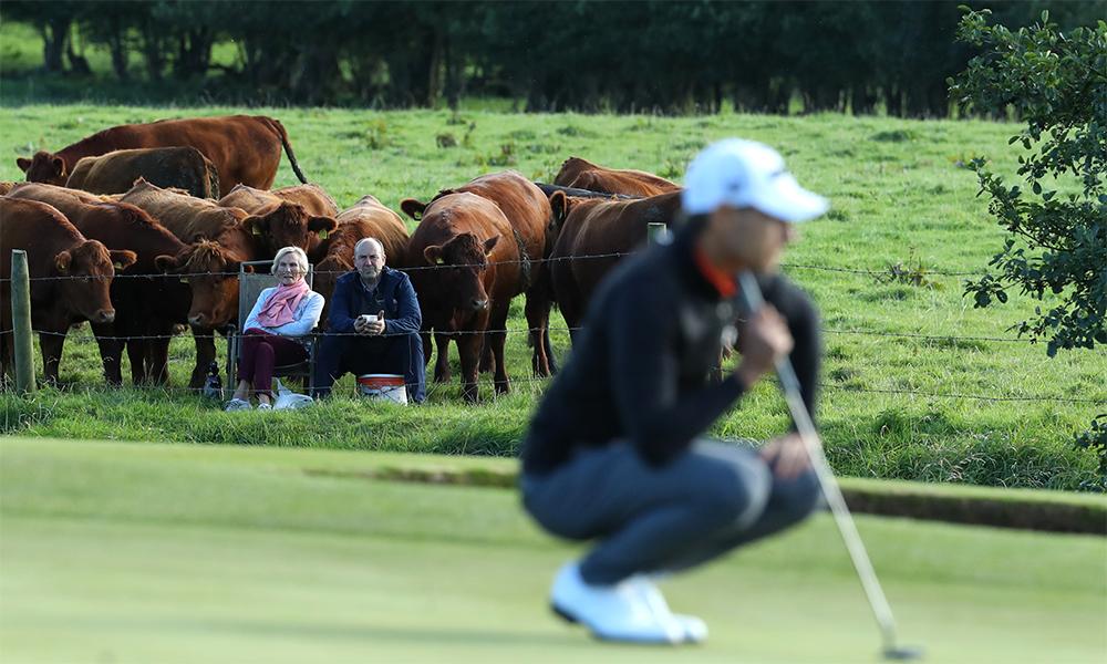 Hai nông dân của trang trại cùng đàn bò khoảng 20 con xem các golfer đọ tài trên hố 14 sân Galgorm hôm 26/9. Ảnh: European Tour